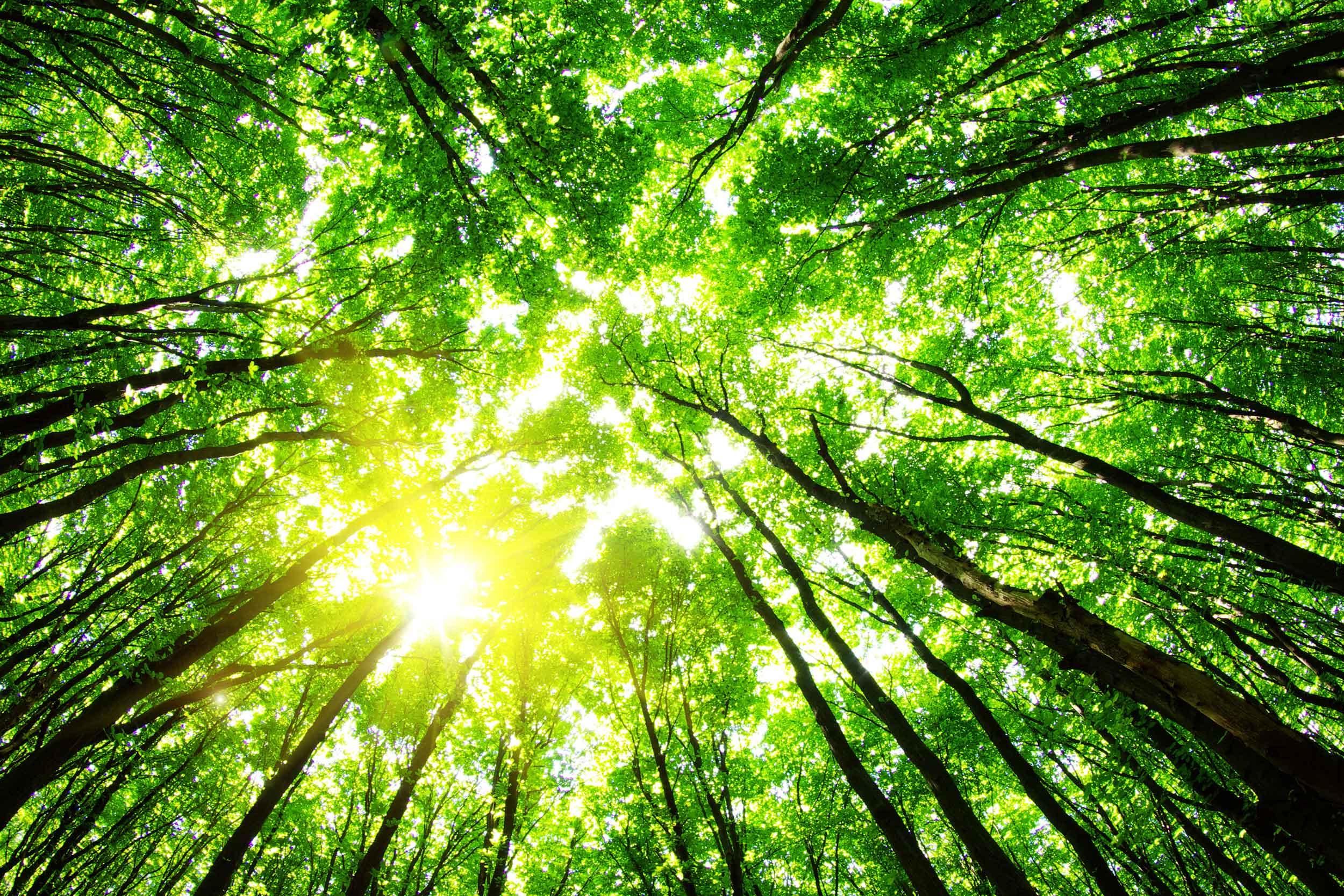 foret arbre air purification de l'air pureaero